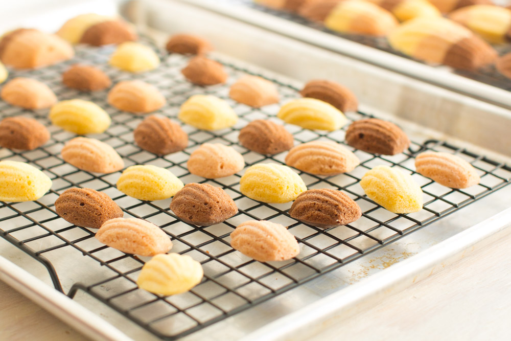 Neapolitan Madeleines minis cooling on a rack.
