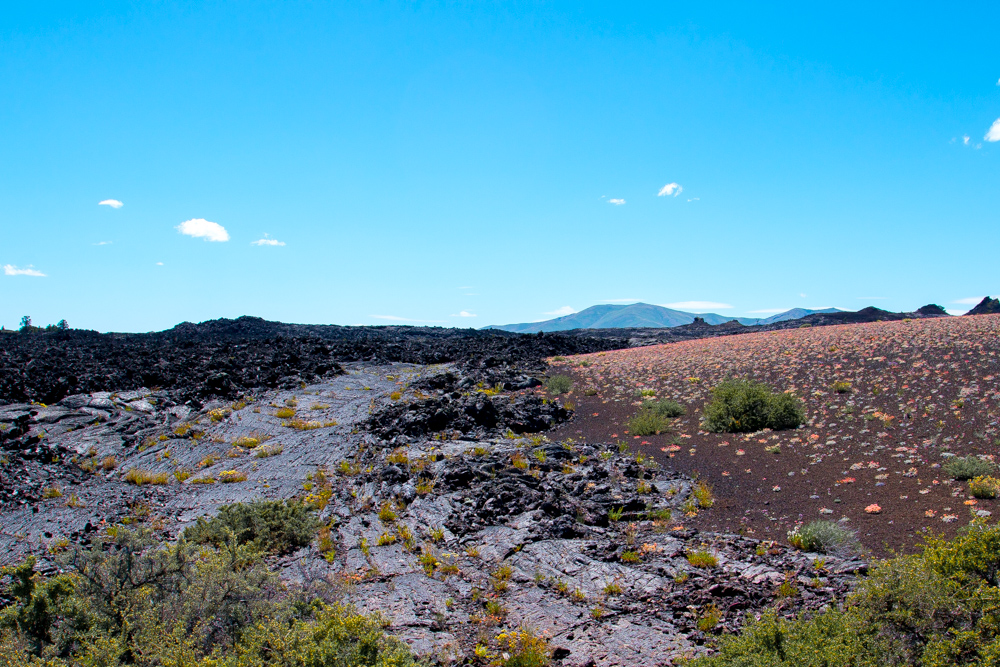 dwarf monkeyflowers and lava rock at Craters of the Moon , ID