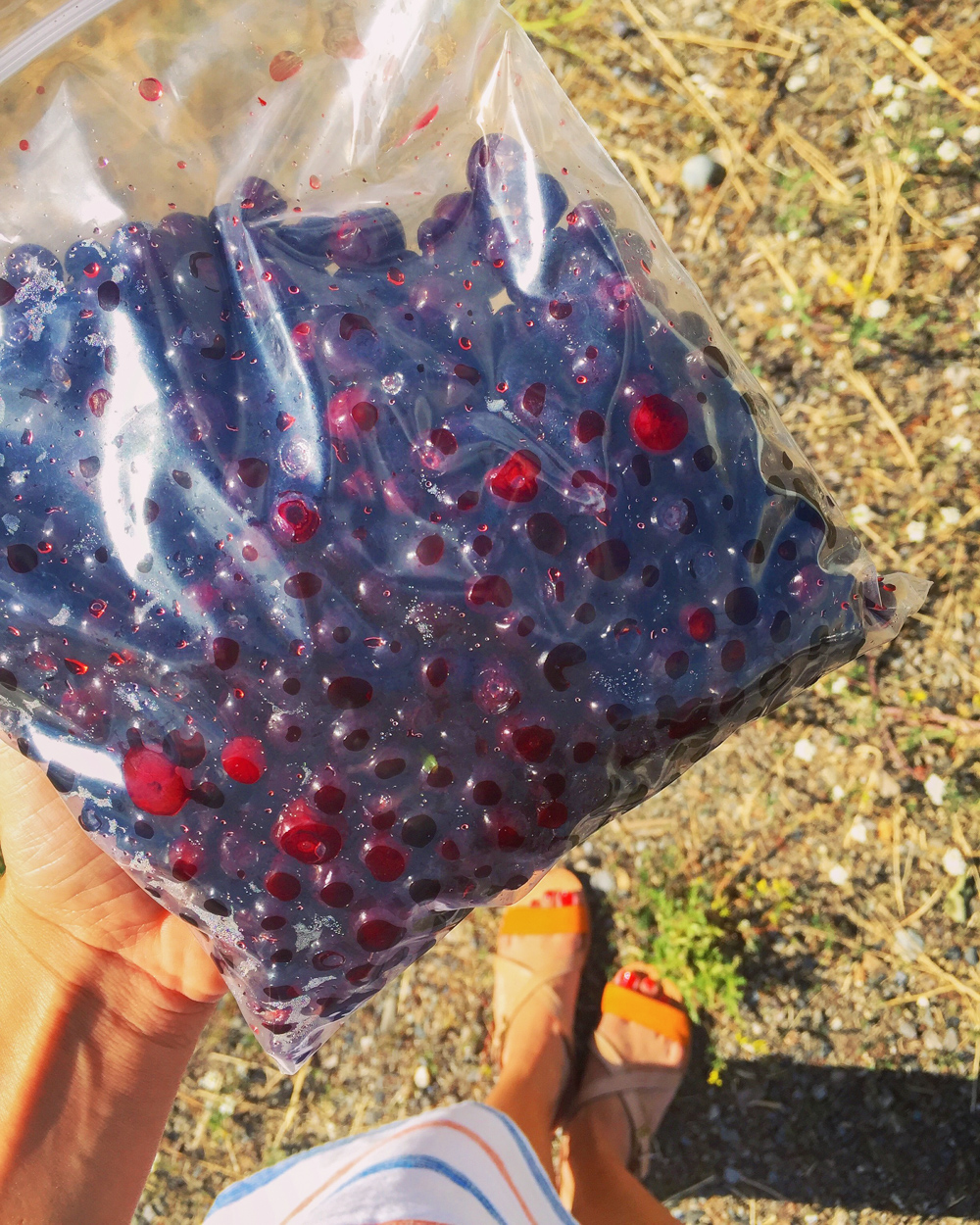 fresh picked huckleberries
