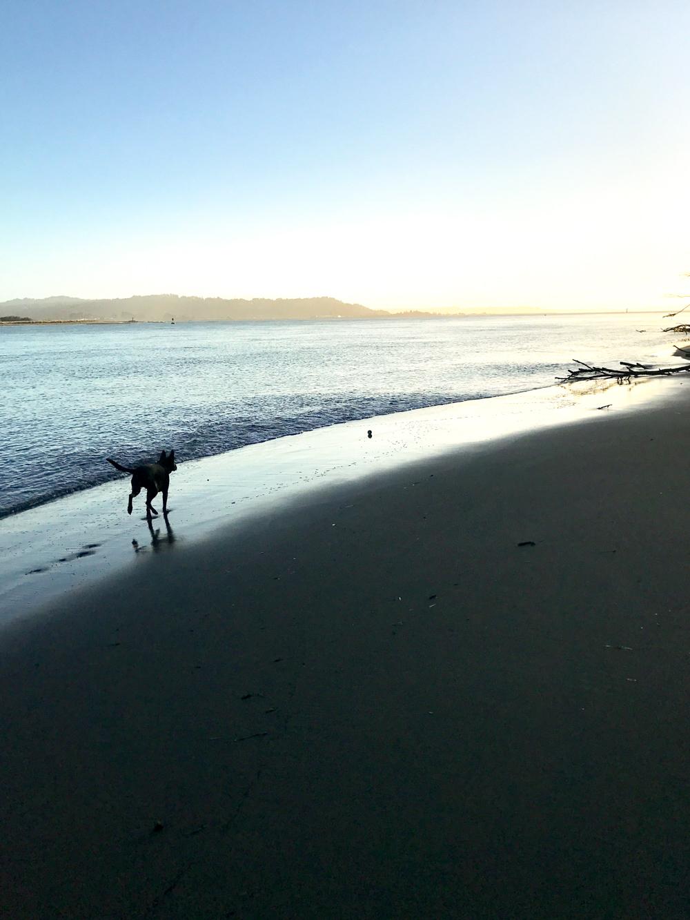Pixel on the beach