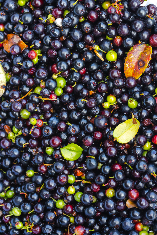 Fresh picked huckleberries